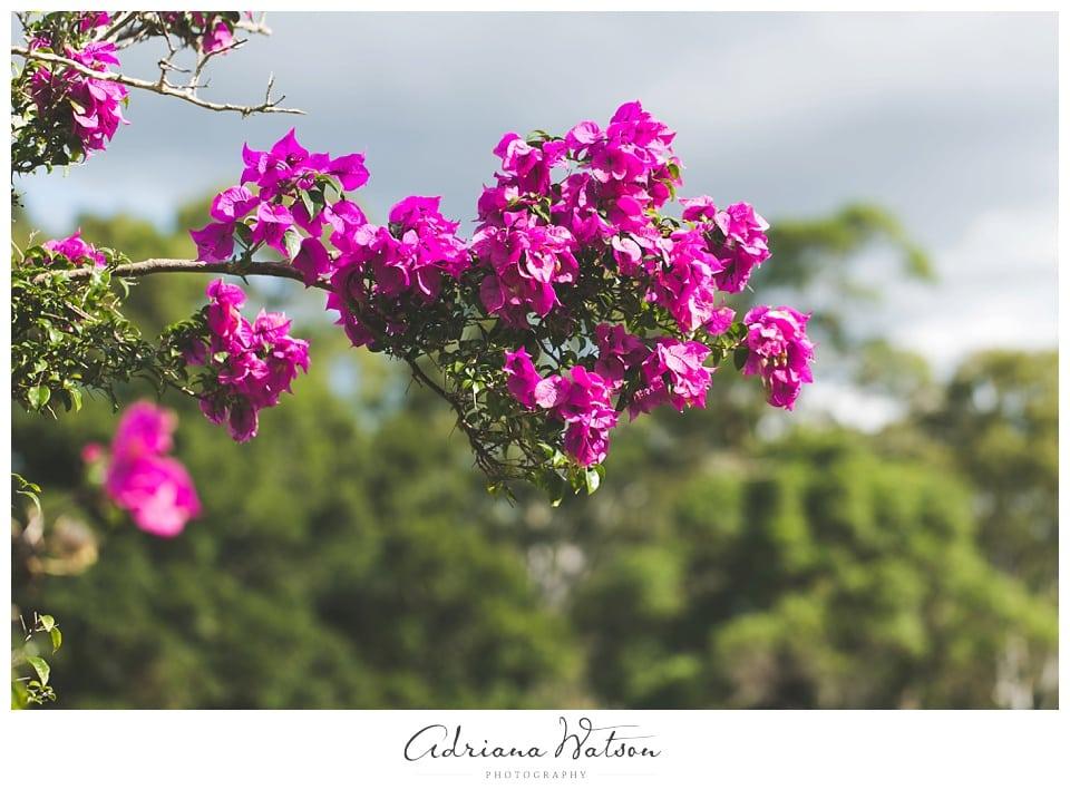 sunshine_coast_photographer_0530